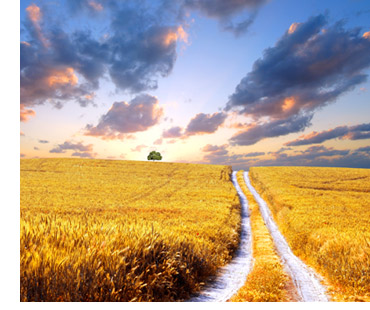 The microstock path